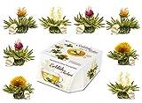 Creano Teeblumen Variation im exklusiven Tassenformat 'ErblühTeelini' - 8 Teeblüten in 4 verschiedenen Sorten (Weißer Tee)